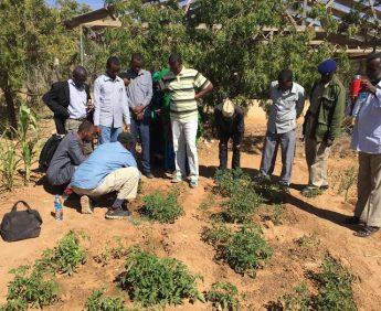 organic farming in somaliland,